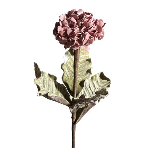 Ορτανσια Ροζ